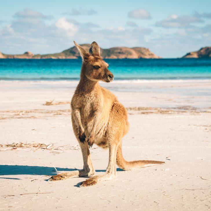 verhuizen naar australië