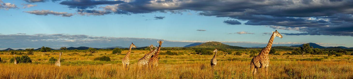verhuizen naar zuid-afrika