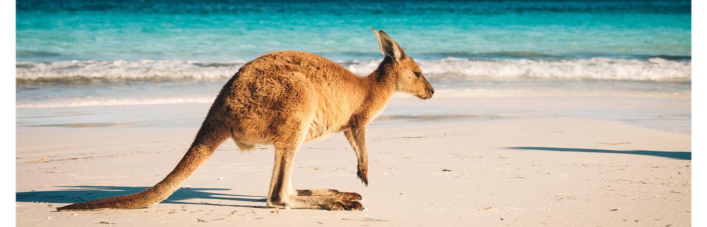 verhuizen naar australie